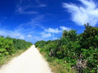обои Песчаная дорога вдоль зеленых кустов фото