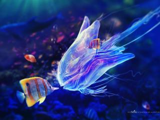 обои Рыба и медуза фото