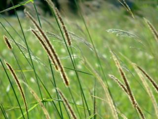 обои Весенняя травка фото