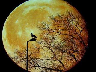 обои Лунный пейзаж фото
