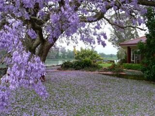 обои Дом у реки с красивым ландшафтом и цветочной лужайкой фото