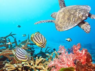 обои Подводная жизнь глубин океана фото