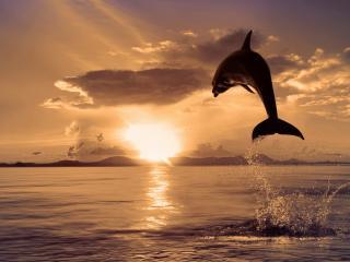 обои Полет дельфина на закате фото