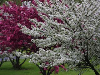 обои Цветут весенние деревья в мае фото