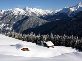 обои Засыпало снегом фото