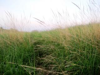 обои Травяное раздолье фото