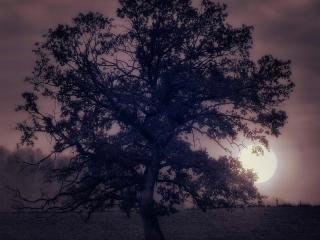 обои для рабочего стола: Дерево и полная луна,   рассвет