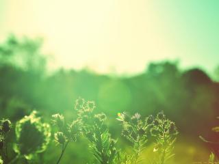 обои Растения в ярком солнечном свете фото