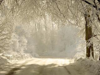 обои Зимняя дорога вдоль красивых снежных деревьев фото