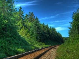 обои Рельсы,   железная дорога,   летний лес,   ясное небо фото