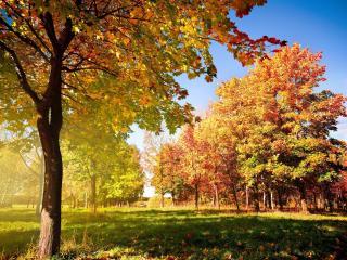 обои Ясный солнечный день в осеннем парке фото