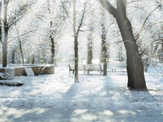 обои Зимний парк,   скамьи,   аллея,   деревья фото
