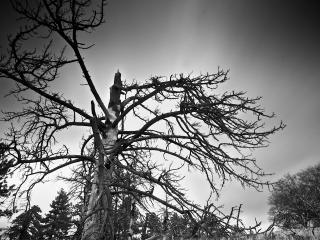 обои Сломанное мрачное дерево фото