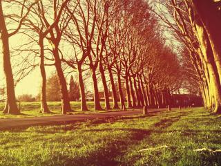 обои Аллея в парке под яркими лучами солнца,   весна фото