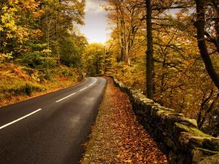 обои Осенняя дорога,   листья на асфальте фото