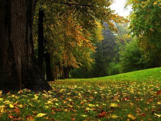 обои Ранняя осень,   опавшие листья на лугу фото