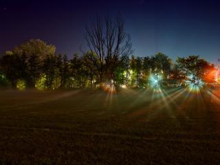 обои Свет праздничных фонарей сквозь деревья фото
