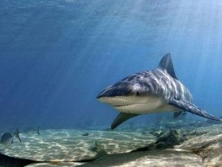 обои Акула в лучах солнца фото