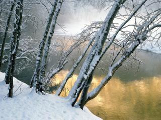 обои Зимние молодые берёзки возле реки фото