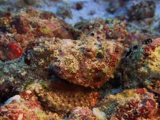 обои Красные кораллы на морском дне фото