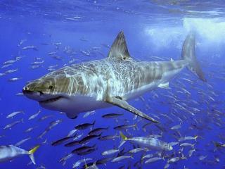 обои Опасность синего моря фото