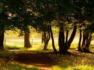 обои Деревья,   ограждение,  солнечное лето фото
