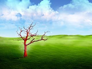 обои для рабочего стола: Зеленый луг,  дерево