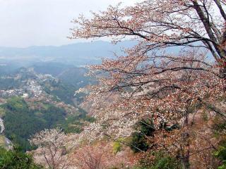 обои Цветущее весеннее дерево, на холме в горной местности фото