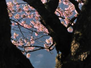 обои Цветущие весенние веточки, в просвете между ветвей деревьев фото