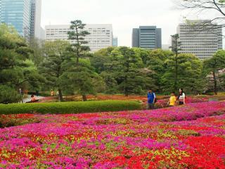 обои Ярко цветущие газоны в Японии фото