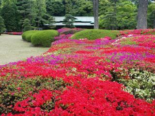 обои Ярко цветущие декоративные газоны фото
