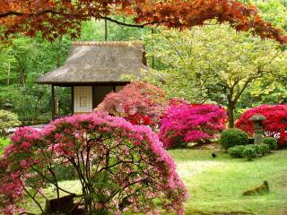 обои Яркость красок цветущих кустарников в Японии фото