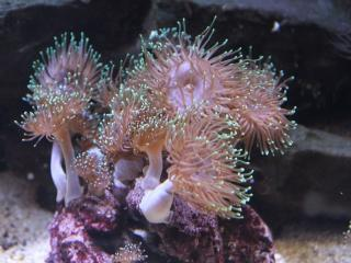 обои Светящиеся подводные цветы фото