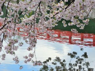 обои Весеннее цветение над водоемом фото