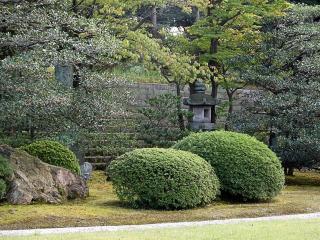 обои Декоративные кустарники в Японском парке фото
