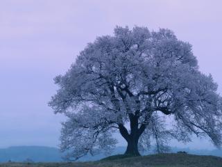 обои Весеннее дерево на холме, цветущее белым цветом фото