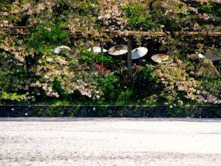 обои Зонтики в японском парке фото