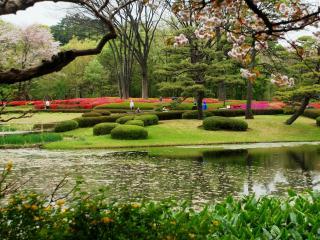 обои Красота весеннего Японского парка фото