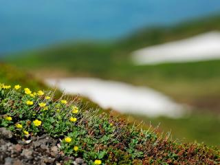 обои Проснувшиеся растения весной фото