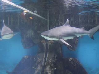 обои Акулий Зоопарк фото