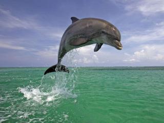 обои Весёлый дельфин фото