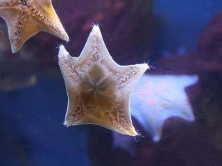 обои Красота морских звёзд фото