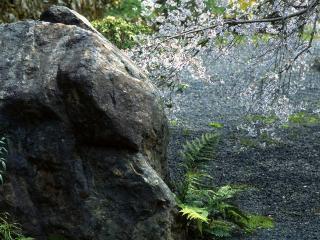 обои Большой камень и цветущая ветка фото