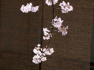 обои Ветка дерева цветущего на фоне стены фото