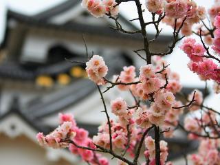 обои Веточка с махровыми цветками на фоне японского дома фото
