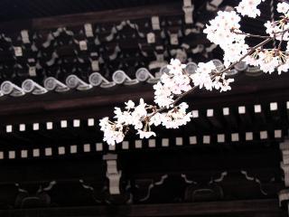 обои Веточка на фоне традиционного японского дома фото
