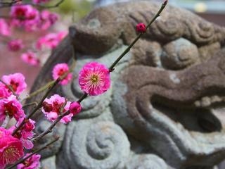 обои Красивые цветки на веточке у скульптуры фото