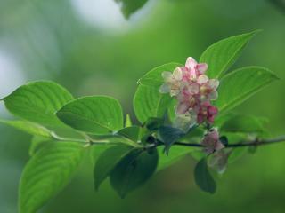 обои Красивый кончик веточки с цветками фото