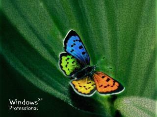 обои Windows бабочка фото