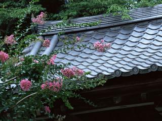 обои Красивая крыша японского дома и цветущий куст фото